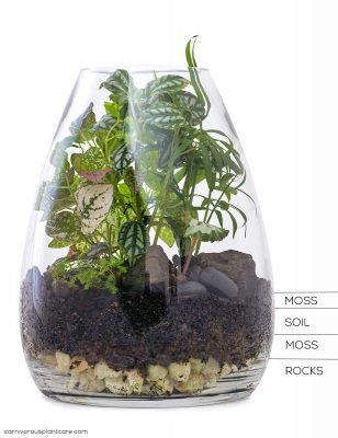 DIY Terrarium Instructions