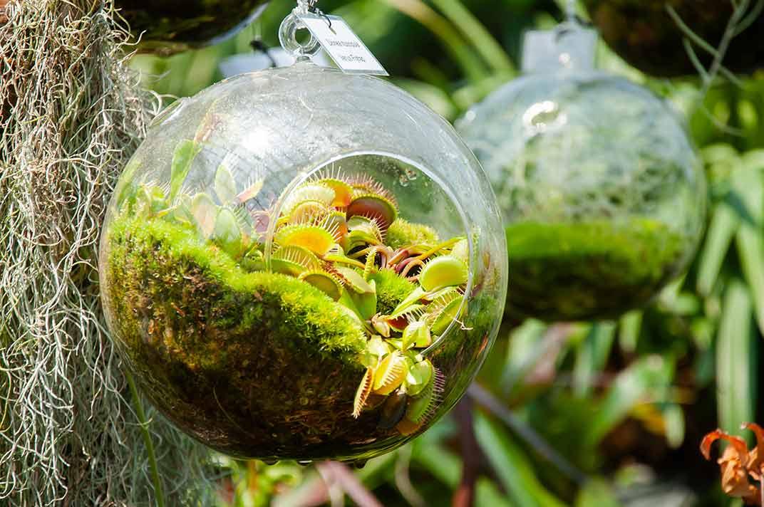 Carnivorous Plant Terrarium Venus Flytrap Terrarium Carnivorous Plant Care